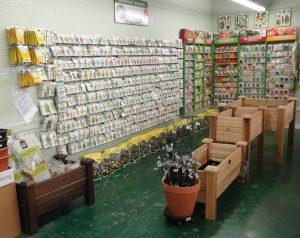 Plant & Vegetable Seeds