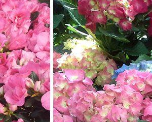 Easter Floral Baskets at the Kingwood Garden Center