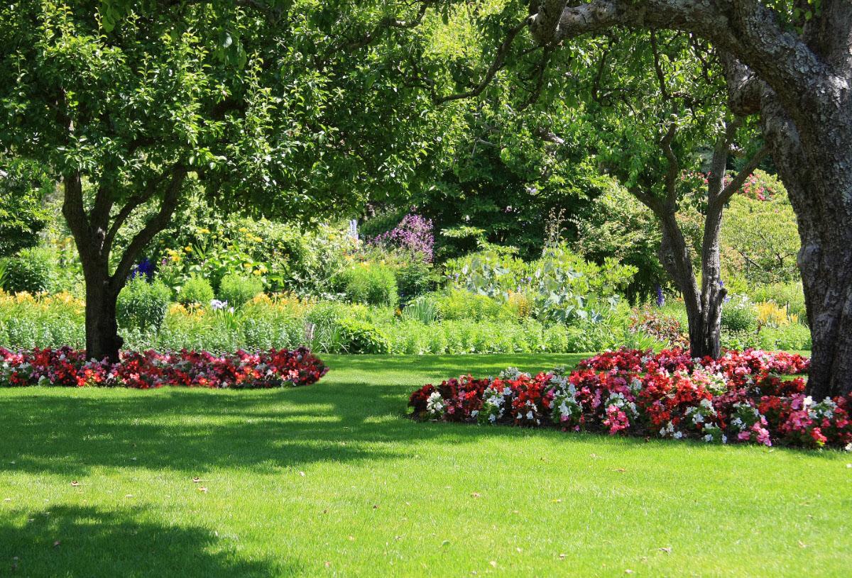 Shrubs For Shade Houston : Top shade plants for north houston kingwood garden center