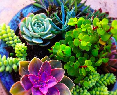 Succulent Creations Workshop