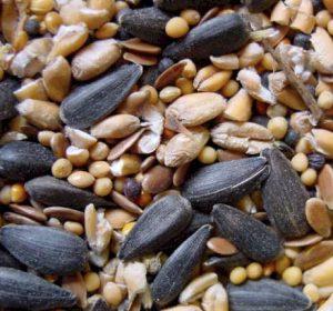 Custom Bird Seed Mixes