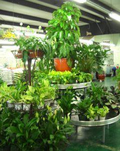 Various Indoor Plants