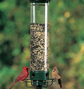 Droll Yankee Bird feeder